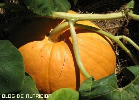 hortalizas bajas en calorías