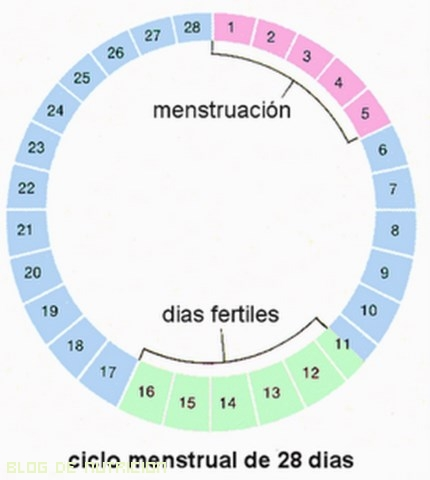calendario de días fértiles