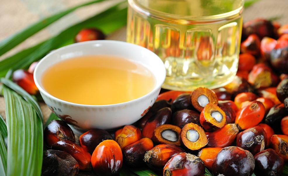 aceite de palma en la salud
