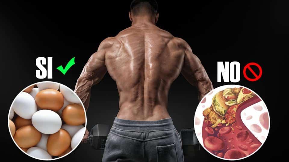 aumentar masa musucular